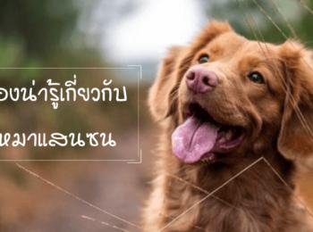 30 เรื่องน่ารู้เกี่ยวกับน้องหมาแสนซน